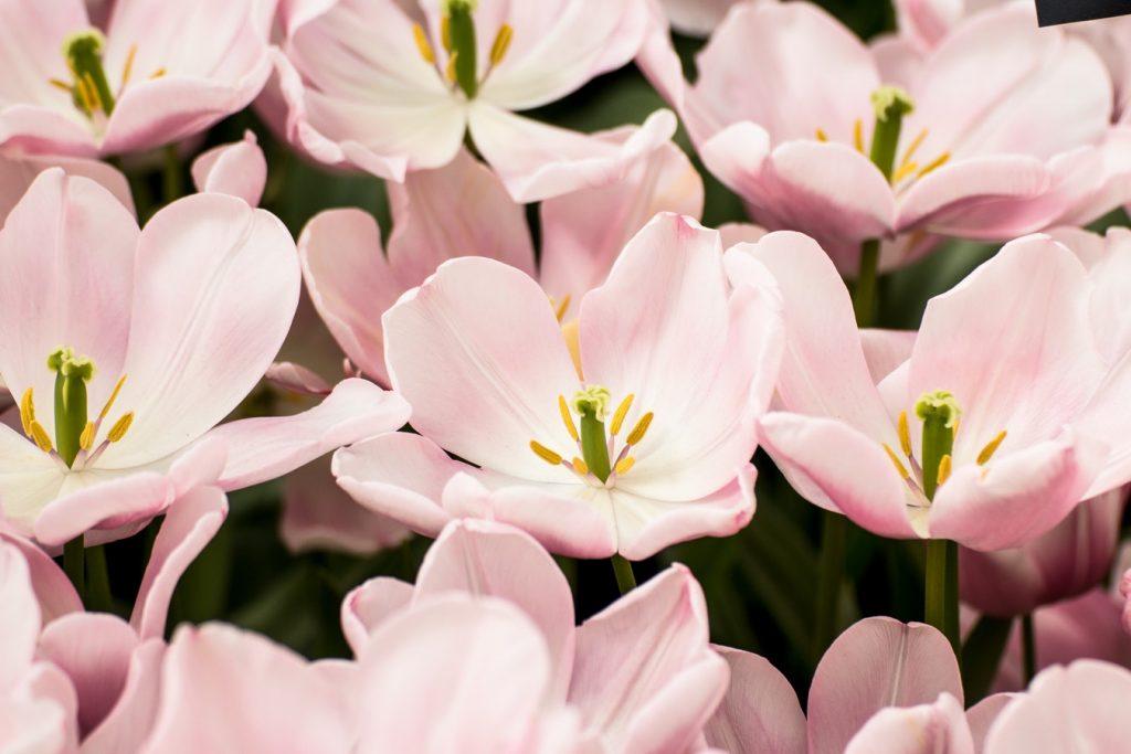 heart of the flower genital massage